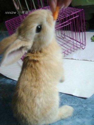 可爱兔子动态斗图