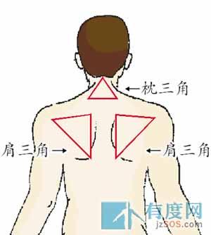 背部身体结构_YOKA时尚博客_YOKA社区