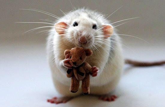可爱小老鼠壁纸
