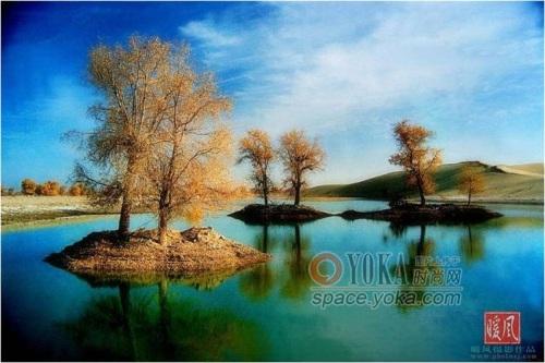 生长在新疆之塔河胡杨