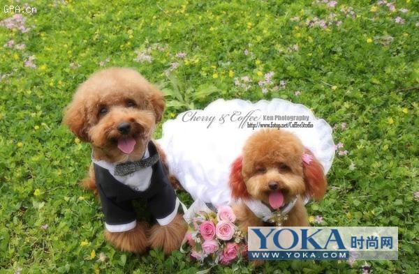 两只可爱狗狗的结婚照!呵呵.