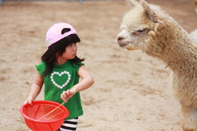 动物庄园里看神兽 - 苗小猪的博客